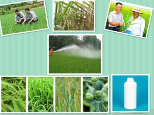 Agricultural Chemicals Agrochemical Herbicide CAS: 330-54-1 98% Diuron Weedkiller pictures & photos
