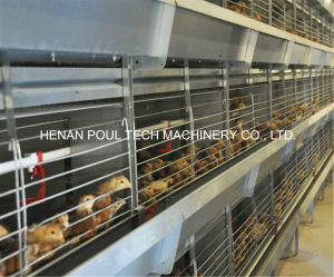 Full Automatic Pullet Battery Cage for Poultry Farm for Sale Pullet Cages System (H Frame) pictures & photos
