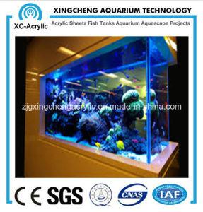 Custom Square Aquarium pictures & photos