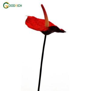 Realistic Fabric Anthurium Artificial Flower pictures & photos