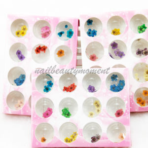 Art Nail Manicure Dried Flowers Decoration Beauty Products Kit (D55)