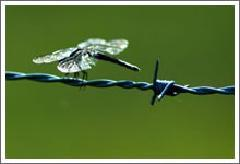 Electro-Galvanized Barbed Wire pictures & photos