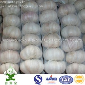 Nice Small Packing Normal White Grlic (red skin garlic)