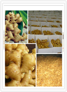 Dried Ginger Air Dried Ginger to All of The World