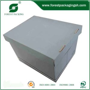 Durable File Boxes (FP098) pictures & photos