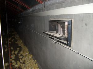 Automatic Ventilation System for Broiler Chicken House Equipment pictures & photos