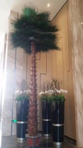 Artificial Plants and Flowers of Coco Palm Gu-SL902094133 pictures & photos