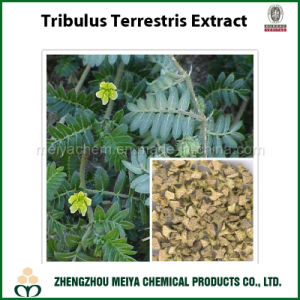 Tribulus Terrestris Powder Extract with Quality Saponin pictures & photos