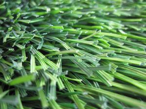 Football W Type Grass