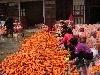 3 Red Fresh Carrot