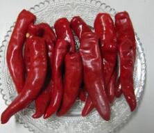 Jinta Chili