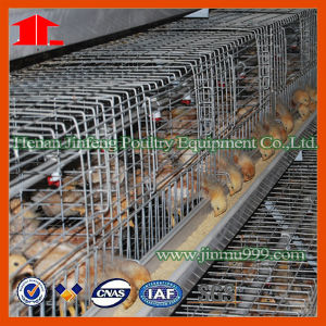 Jinfeng Chicken Cage for Pullet pictures & photos
