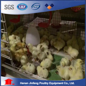 H Type Automatic Chikcen Cage for Pullet/ Poultry Equipment for Sale pictures & photos
