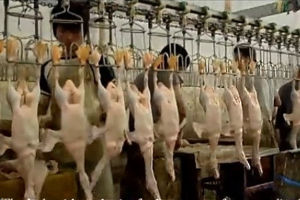 Good Quality Halal Poultry Slaughter Equipment House Line pictures & photos