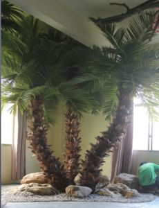 Artificial Palm Tree pictures & photos