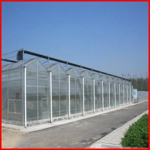 China Agricluture Multi Span Glass Garden Greenhouse for Sale pictures & photos