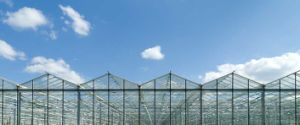 4mm Tempered/Toughened Glass for Greenhouse with Various Size pictures & photos