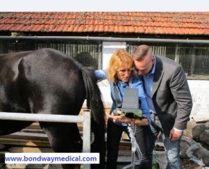 Horse Injured Ultrasound Scanning pictures & photos