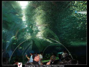 Custom Ocean World Acrylic Tunnel Boards pictures & photos