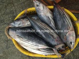 Big Size Skipjack Tuna pictures & photos