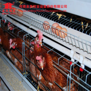 a Type Hot Galvanized Manufacturer Automatic Chicken Layer Cage pictures & photos