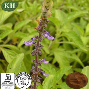 High Quality Coleus Forskohlii Extract Forskolin 20% pictures & photos