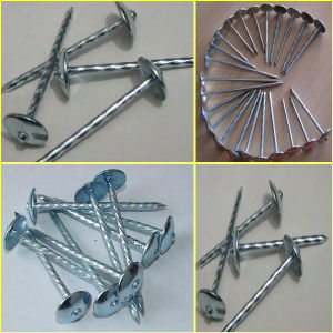 Galvanized Roofing Nails (ZL-RN) pictures & photos