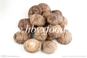 100% Natural Pollution-Free Dried 4-5cm Smooth Shiitake Mushroom pictures & photos