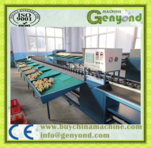 Hot Sale Commercial Fruit Weight Sorter pictures & photos