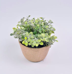 New Style Plants in Paper Mache Pot for Office Decoration pictures & photos