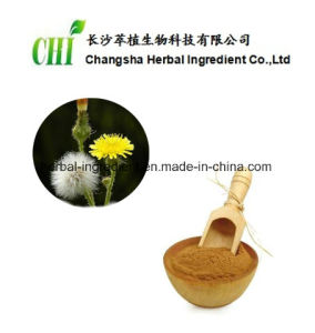 Dandelion Extract 1%-10% Flavones, 20% Phytosterols for Foods and Supplement pictures & photos