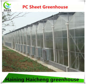 Multi Span Venlotype PC Greenhouse pictures & photos