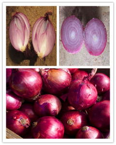 2015 Top Quality Fresh Red Onions