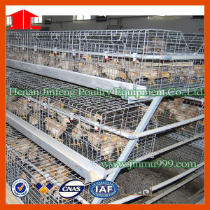 Jinfeng Poultry Farm Equipment pictures & photos