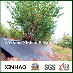 Fruit Planting Weed Control Mat Fabric pictures & photos