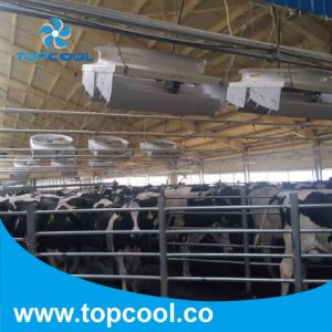 """High Efficiency 72"""" Vhv Series Circulation Fan Especially for Dairy Barn pictures & photos"""