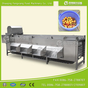 Potato and Onion Sorting Machine, Orange Sorting Machine pictures & photos