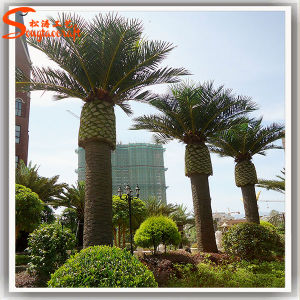 Outdoor Decoration Fiber Glass Artificial Date Palm Tree pictures & photos