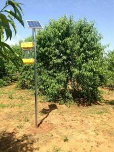 Solar Frequency Vibrational Insecticidal Lamp pictures & photos