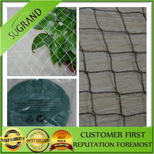 Hot Sale and High Quality Bird Catching Nets pictures & photos