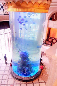 Cylinder Acrylic Fish Aquarium pictures & photos