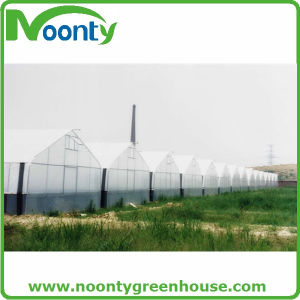 150 Micron PE Plastic Film for Greenhouse pictures & photos