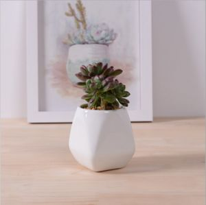 Ivory Creative Personality Fashion Ceramic Flower Pot pictures & photos