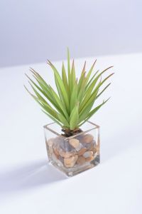 Grass Plant in Glass with Faux Water and Rock for Decoration pictures & photos