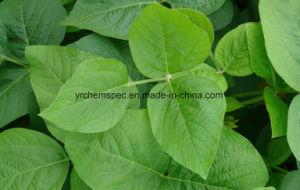 Top Quality Soybean Extract Phosphatidyserine Powder/Phospholipids Series pictures & photos