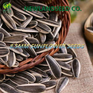 Top Quality Sunflower Seeds with Available Free Sample for You pictures & photos