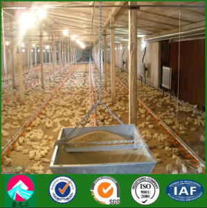 Poultry Sheds Construction From China Supplier-Steel Poultry Farming Shed pictures & photos