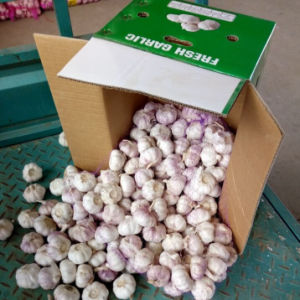 Fresh Garlic Packed in 10kg Carton for Russia Market pictures & photos
