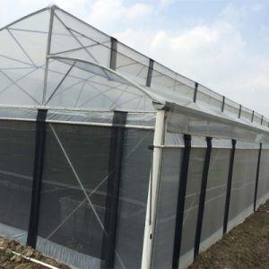 Zigzag Roof Film Greenhouse Fz80f40 pictures & photos