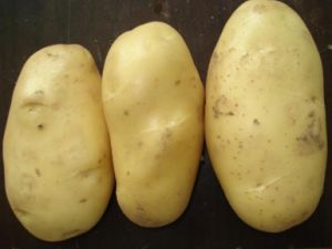 New Crop Good Quality Fresh Holland Potato pictures & photos